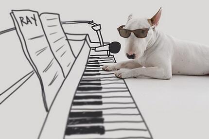 Pitbull Jimmy, Klavier