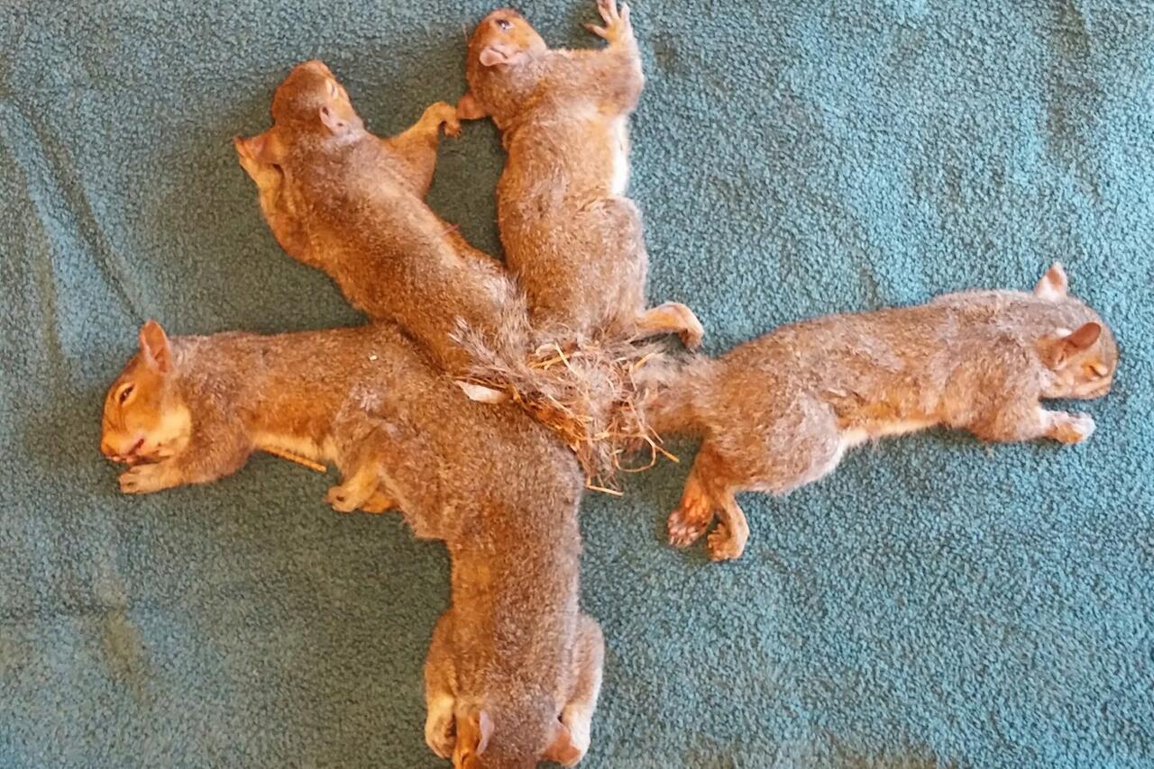 Bild zu Eichhörnchenknoten