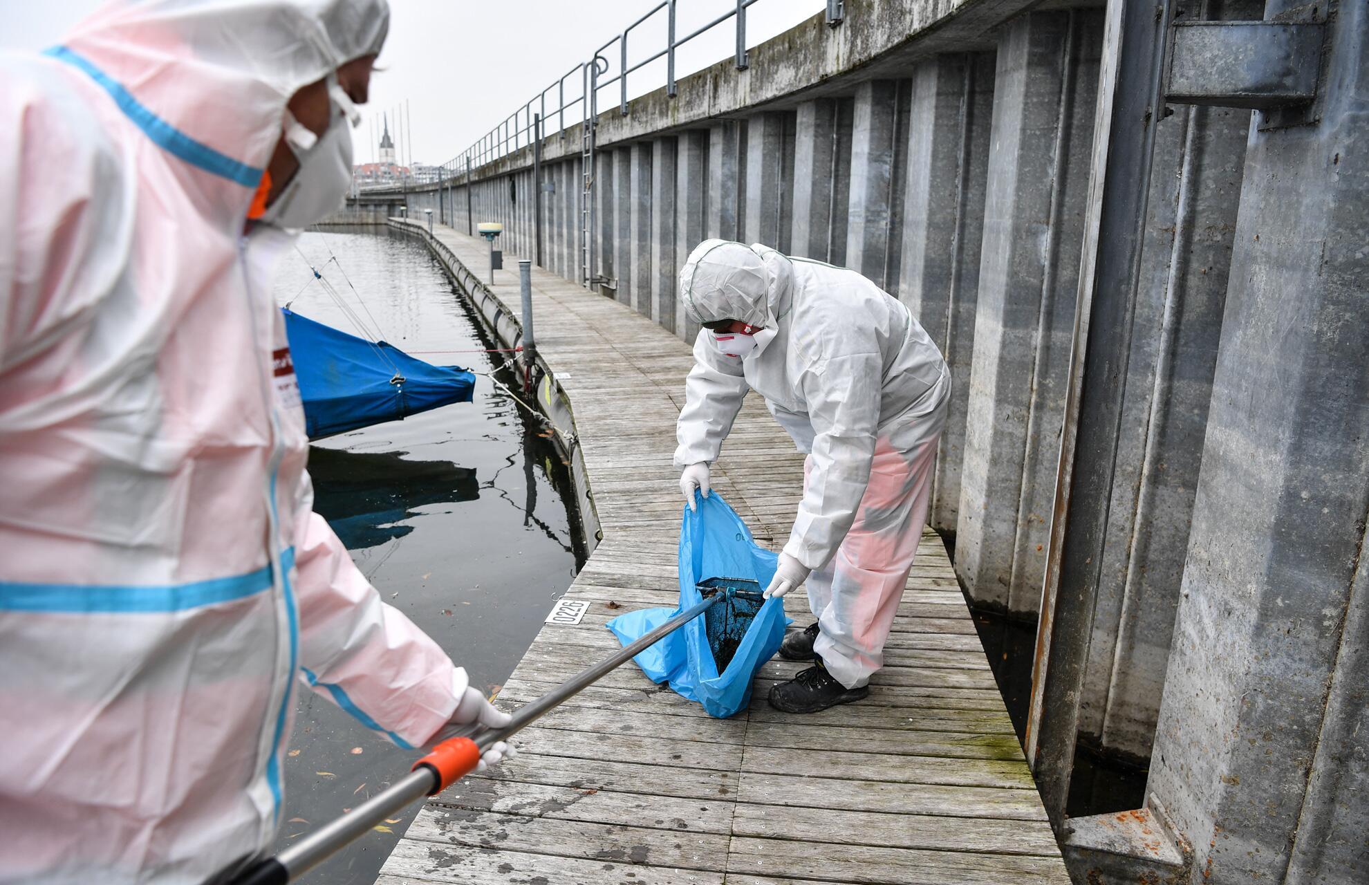 Bild zu Vogelgrippe am Bodensee