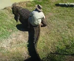 Krokodil Ritt