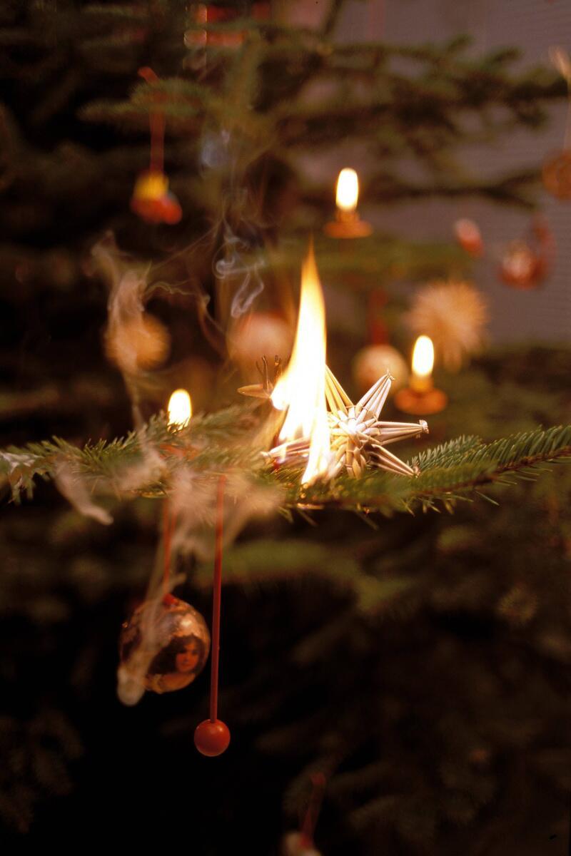 Bild zu Brennender Baum