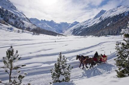 Pferdeschlittenfahrt mit Gletscher-Panorama