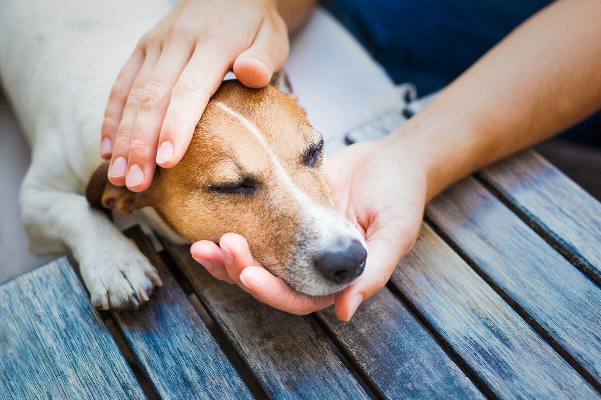 Bild zu Hunde, Vierbeiner, Lebensmittel, giftig, Vergiftung