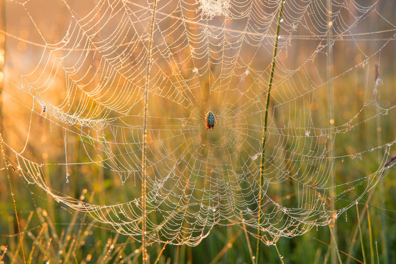 Bild zu Spinnen