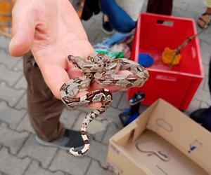Schlangen im Kindergarten