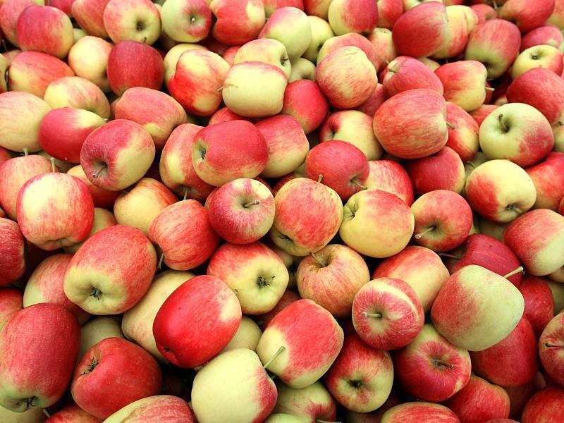 Bild zu Äpfel