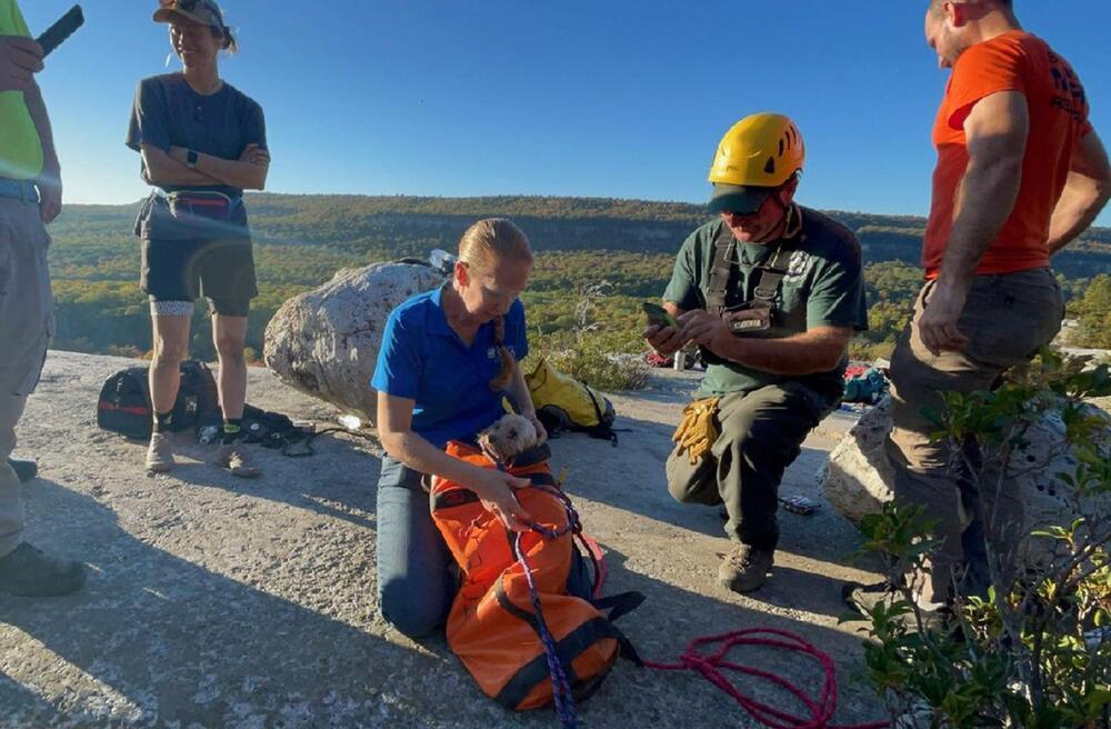 USA: In Felsspalte gefangener Hund nach fünf Tagen gerettet