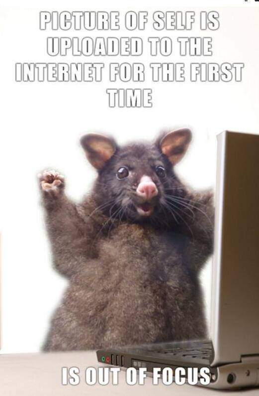 Bild zu Possum, Meme