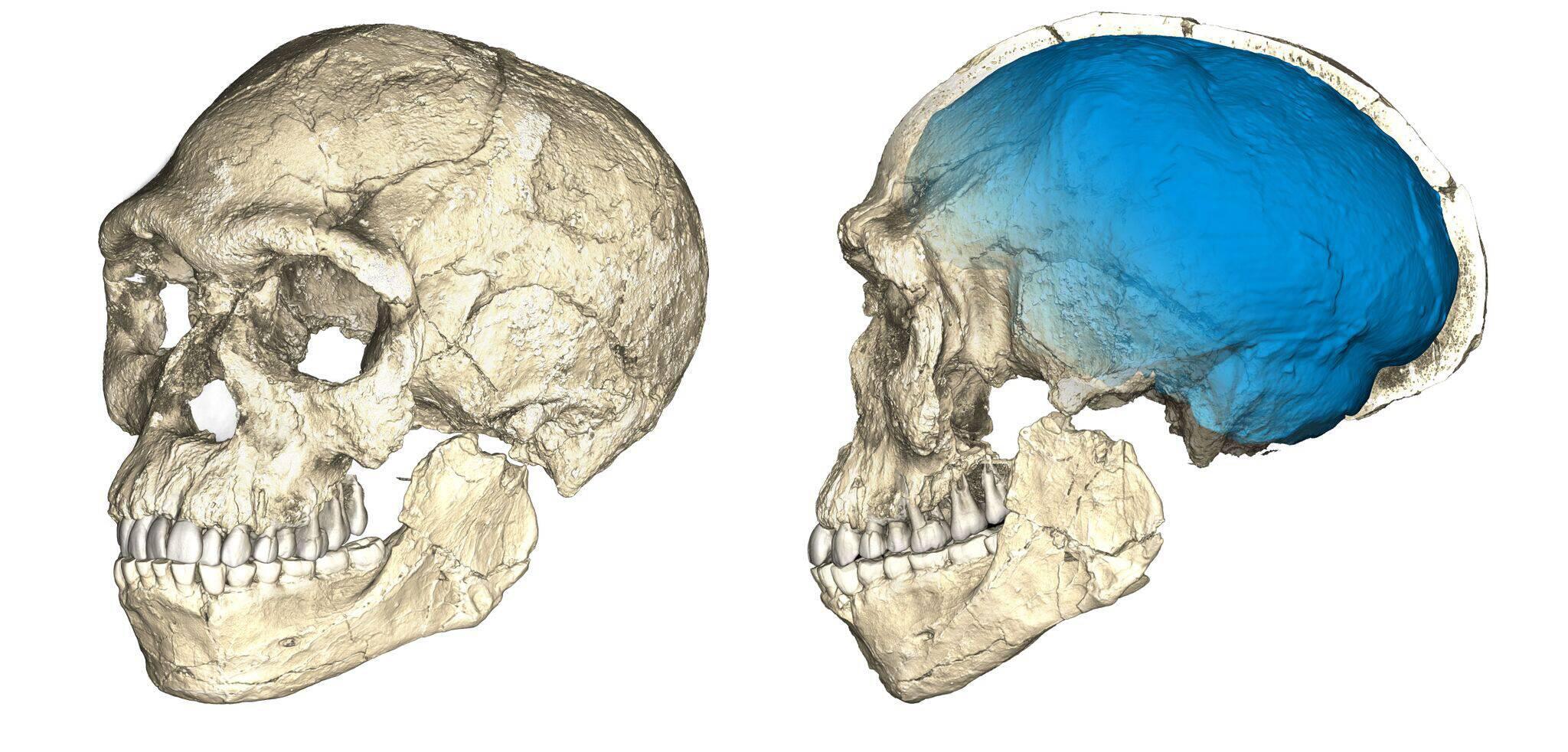 Bild zu Homo sapiens