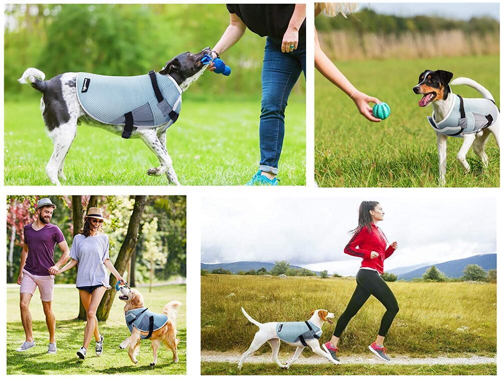 Hunde, Hitze, Sommer, Sonne, Kühlen, Schwitzen, Haustier