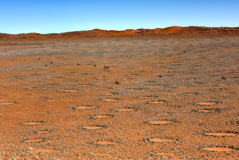 Bild zu Feenkreise in der Wüste Namibias