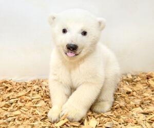 Erster Arztbesuch bei Berliner Eisbärenmädchen