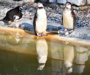 Möglicher Diebstahl von Pinguin in Mannheim