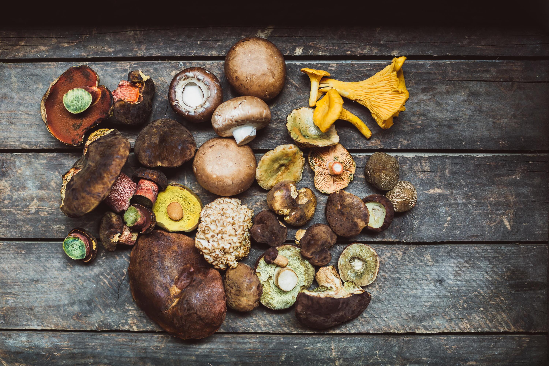 Bild zu Pilze