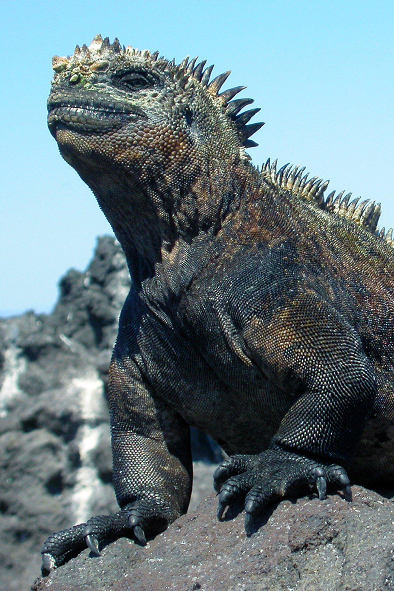 Bild zu Godzilla