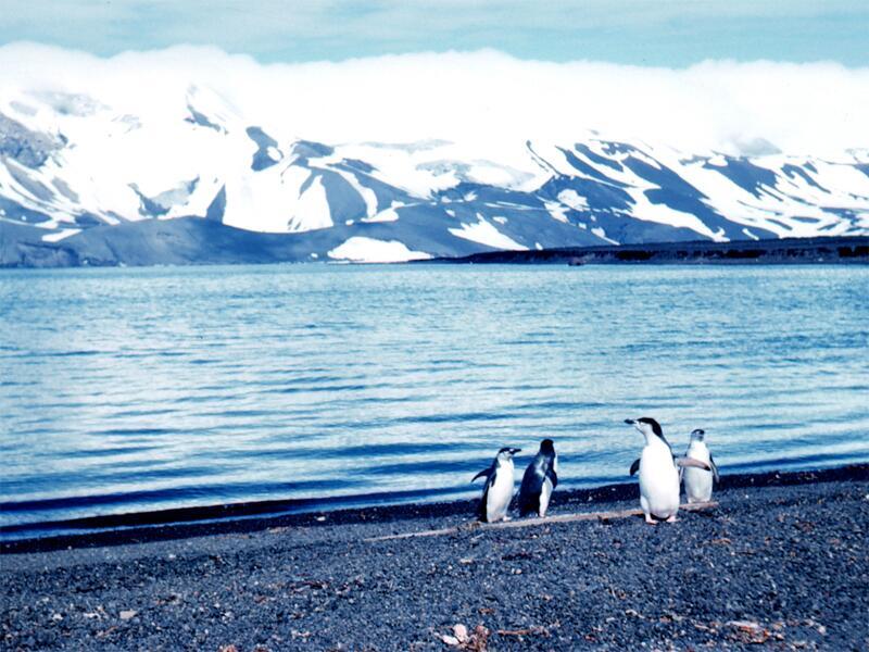 Bild zu Deception Island
