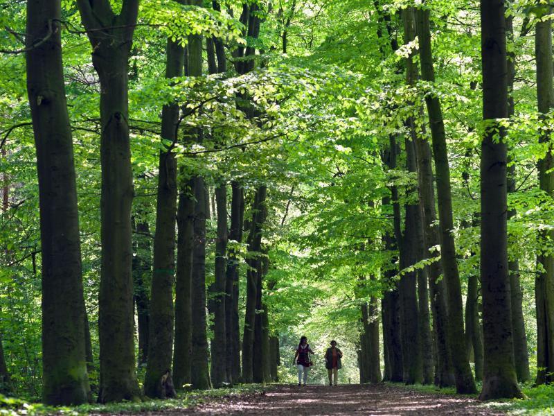 Bild zu Waldspaziergang