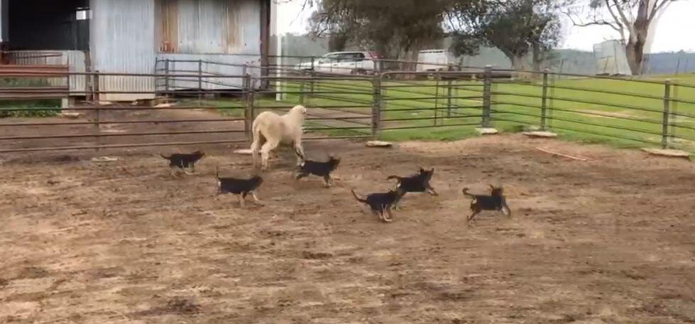 Bild zu Schafehüten