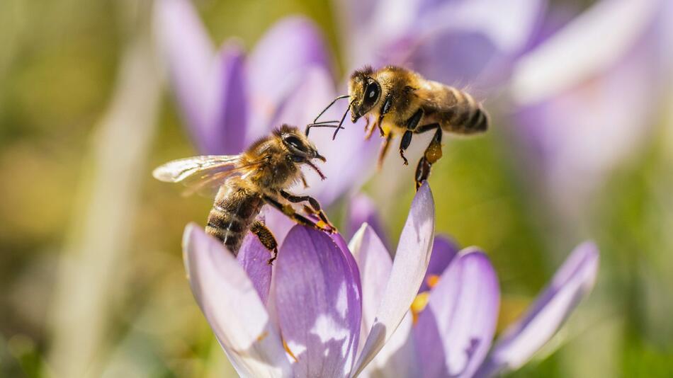 Bienen, Blüte
