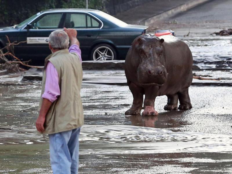 Bild zu Steht ein Nashorn auf der Straße