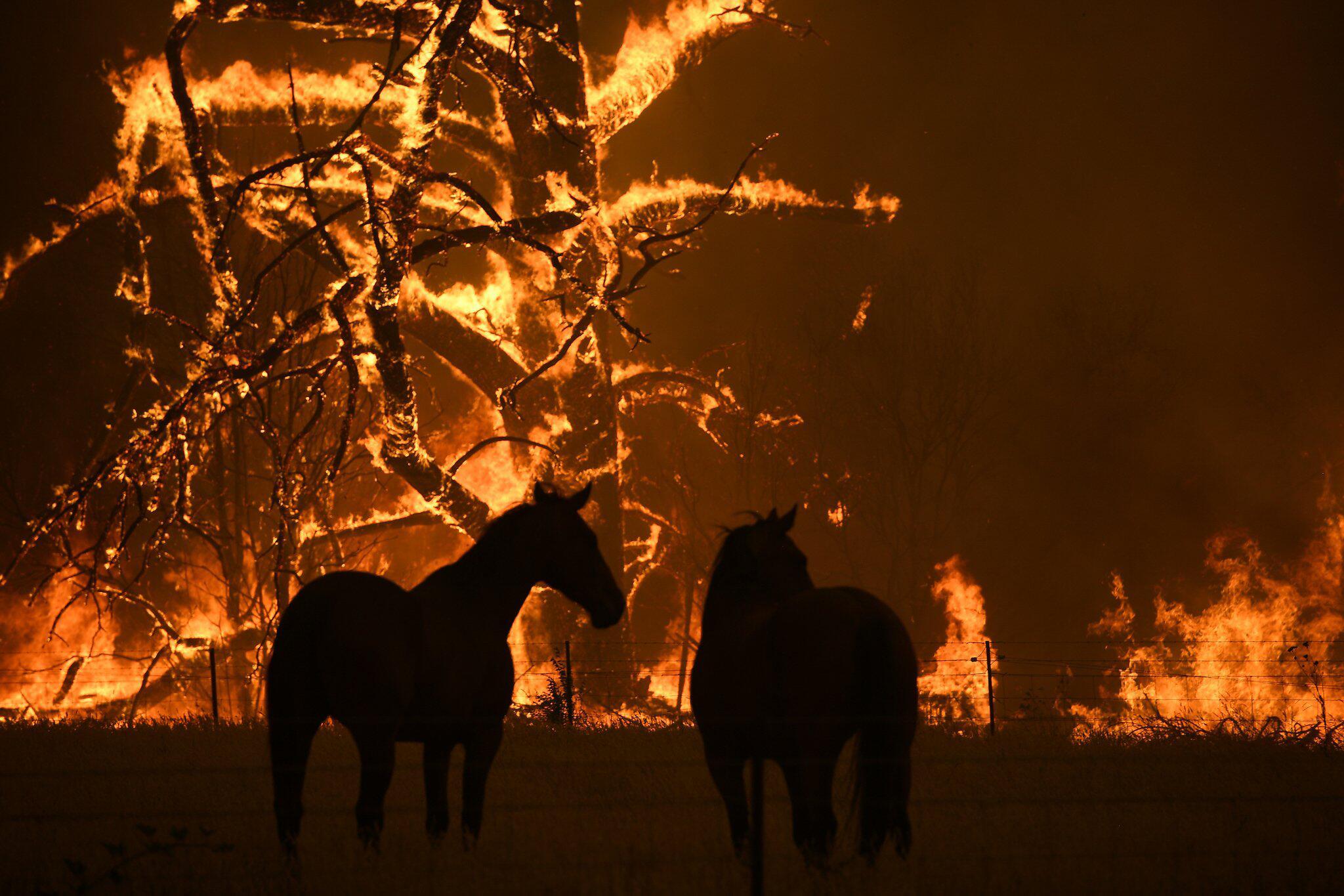 Bild zu Buschbrände in Australien