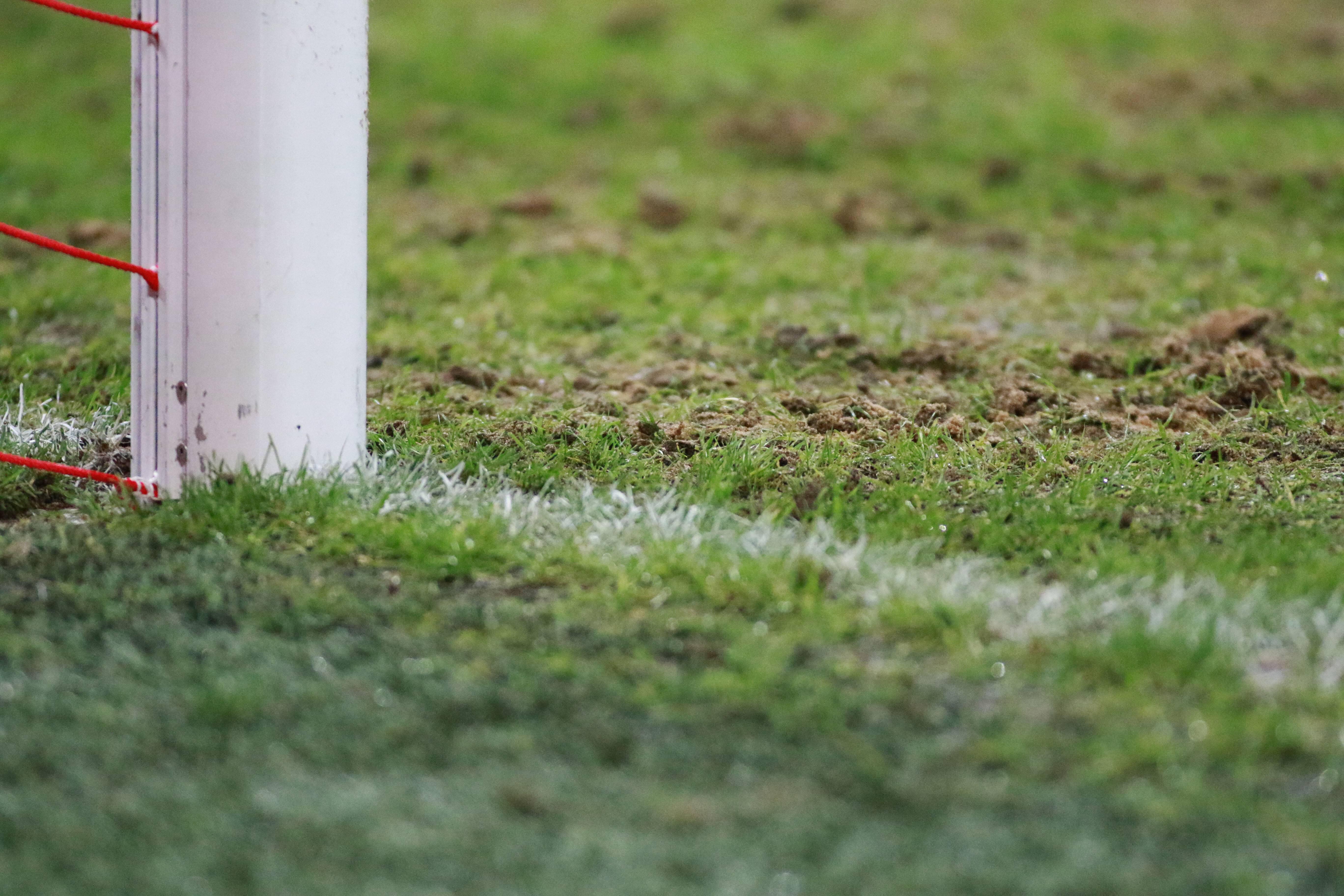 Bild zu Allianz Arena Rasen Pilze