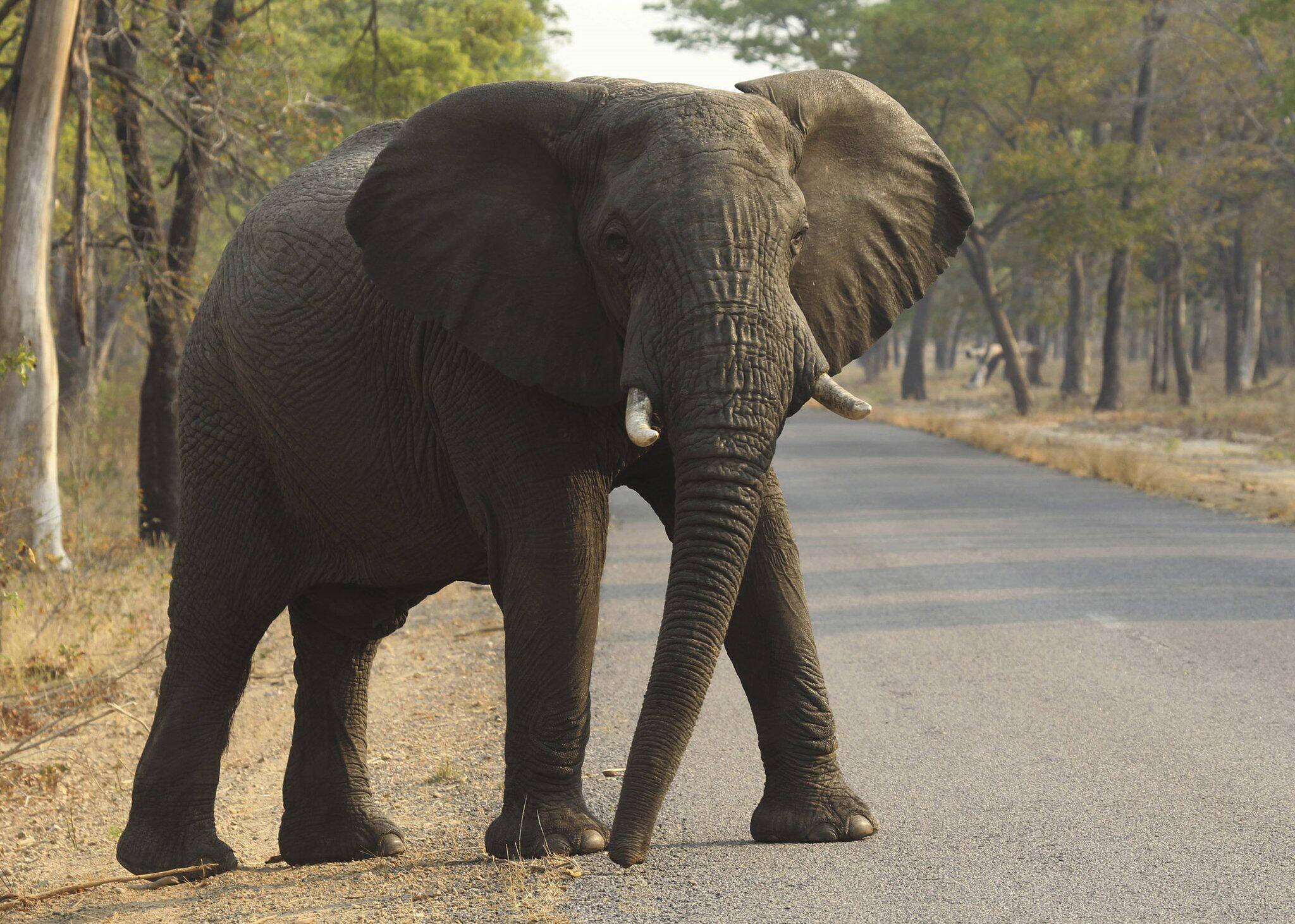 Bild zu Dutzende Elefanten sterben bei Dürre in Simbabwe