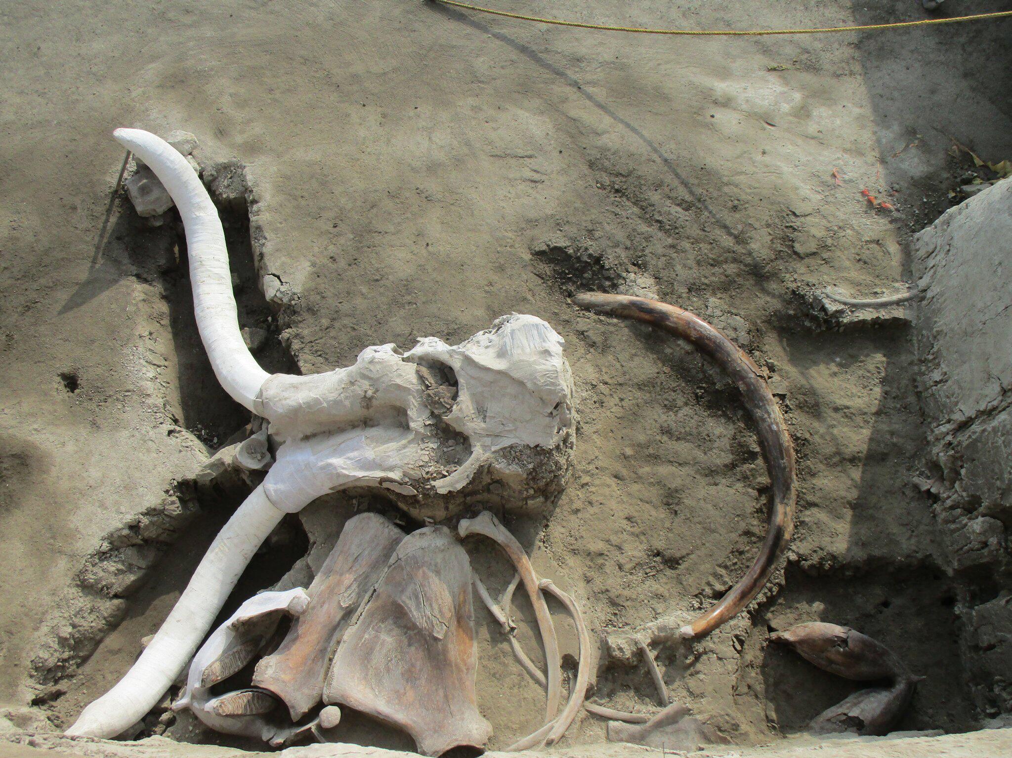 Bild zu Fallgruben für die Mammutjagd in Mexiko ausgegraben