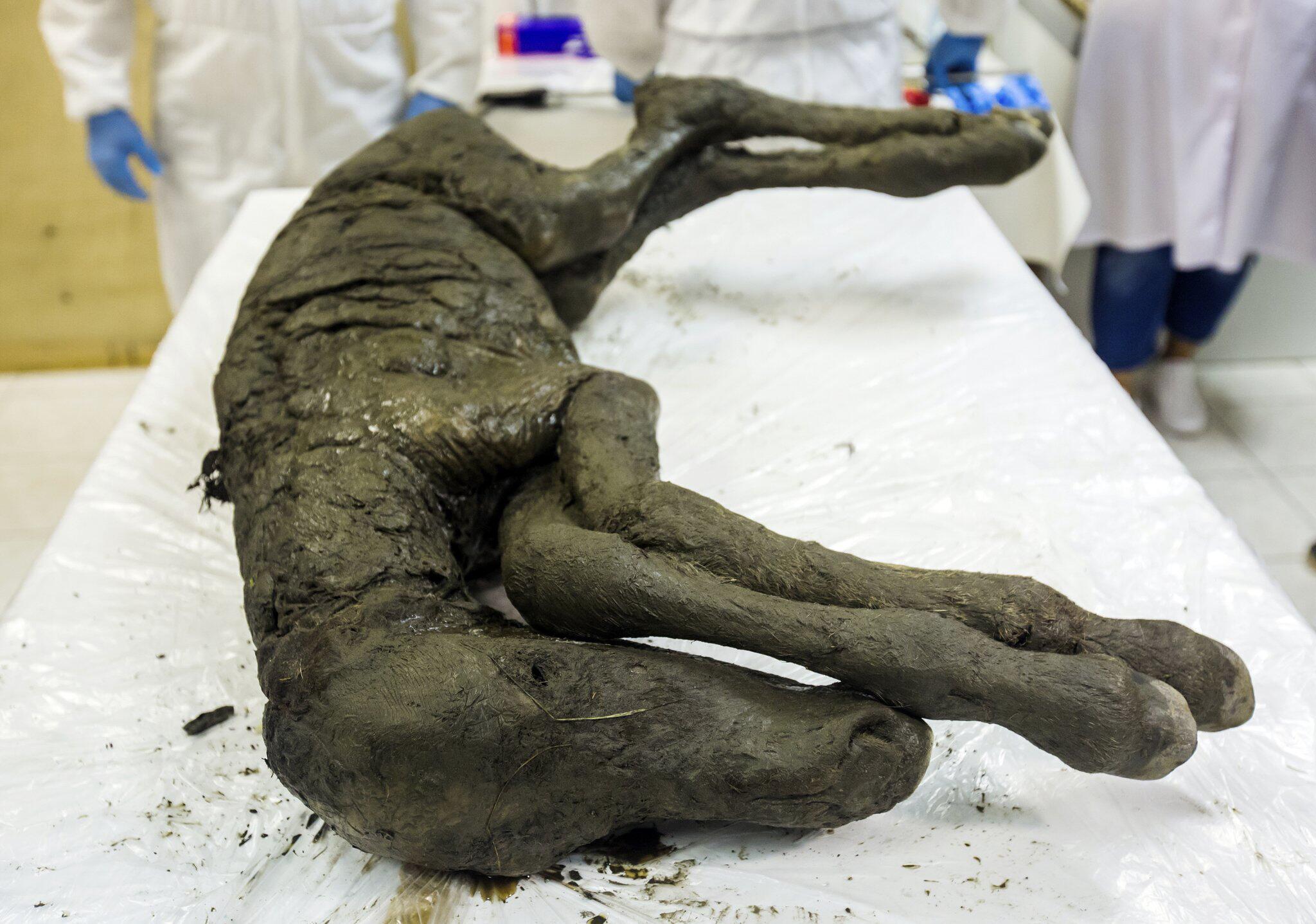 Bild zu Pferde-Fossil