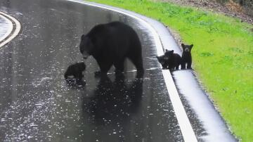 Bild zu Bären