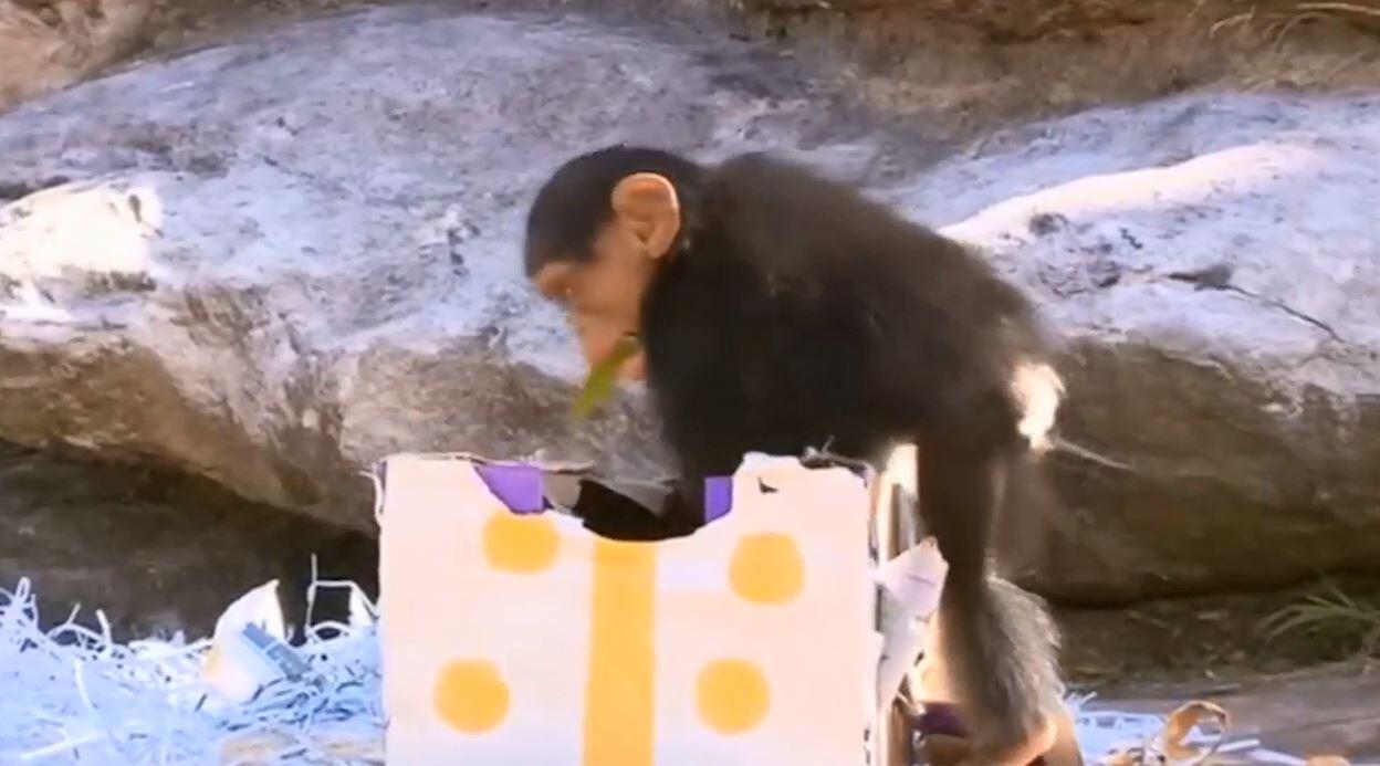 Bild zu Affen feiern Weihnachten