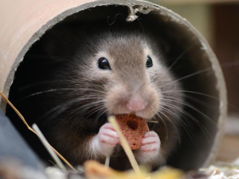 Bild zu Nahrung für den Hamster