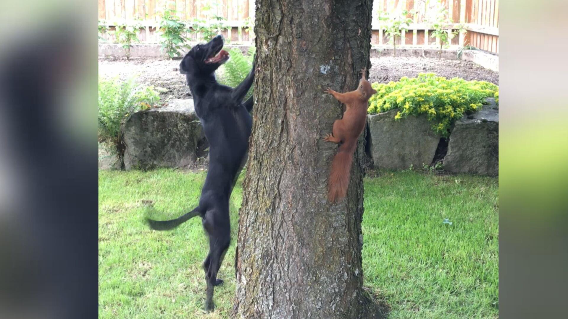Bild zu Eichhörnchen und Hund - was ist da los?