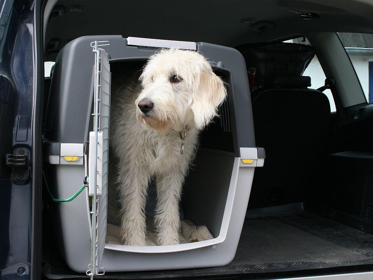 Bild zu Hund im Auto transportieren: Im Laderaum oder mit Transportbox