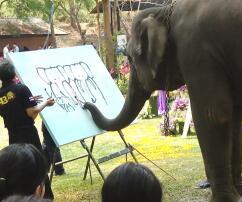 Elefant, Thailand, Rüssel, Malen, Gemälde, Chiang Mai, Selbstporträt