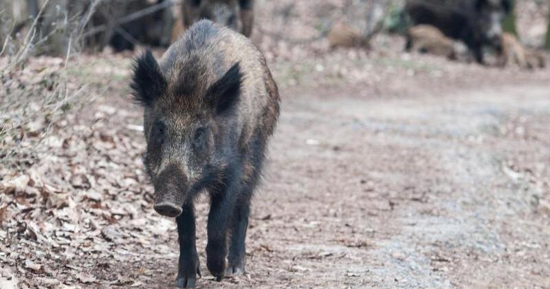 wildschweine im garten vermieter muss zaun reparieren gmx. Black Bedroom Furniture Sets. Home Design Ideas