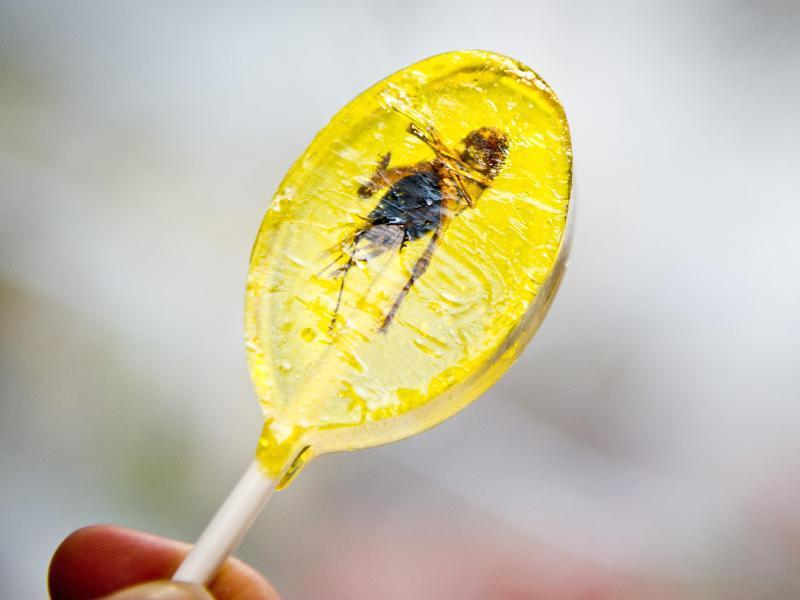 Bild zu Insektenlutscher