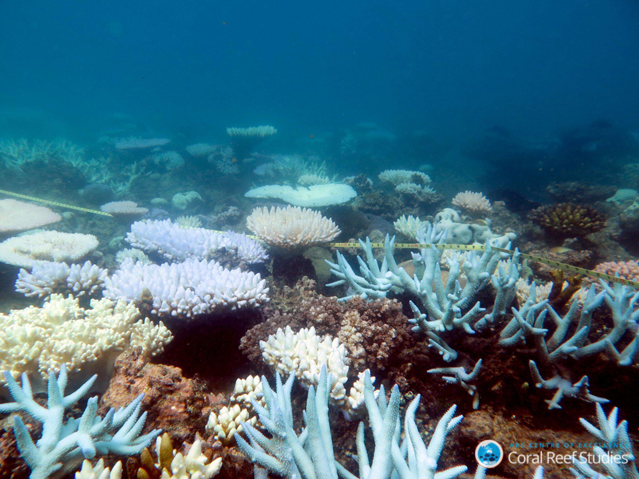 Bild zu Great Barrier Reef