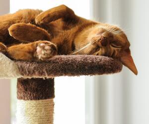 Alles, was Katzen glücklich macht.