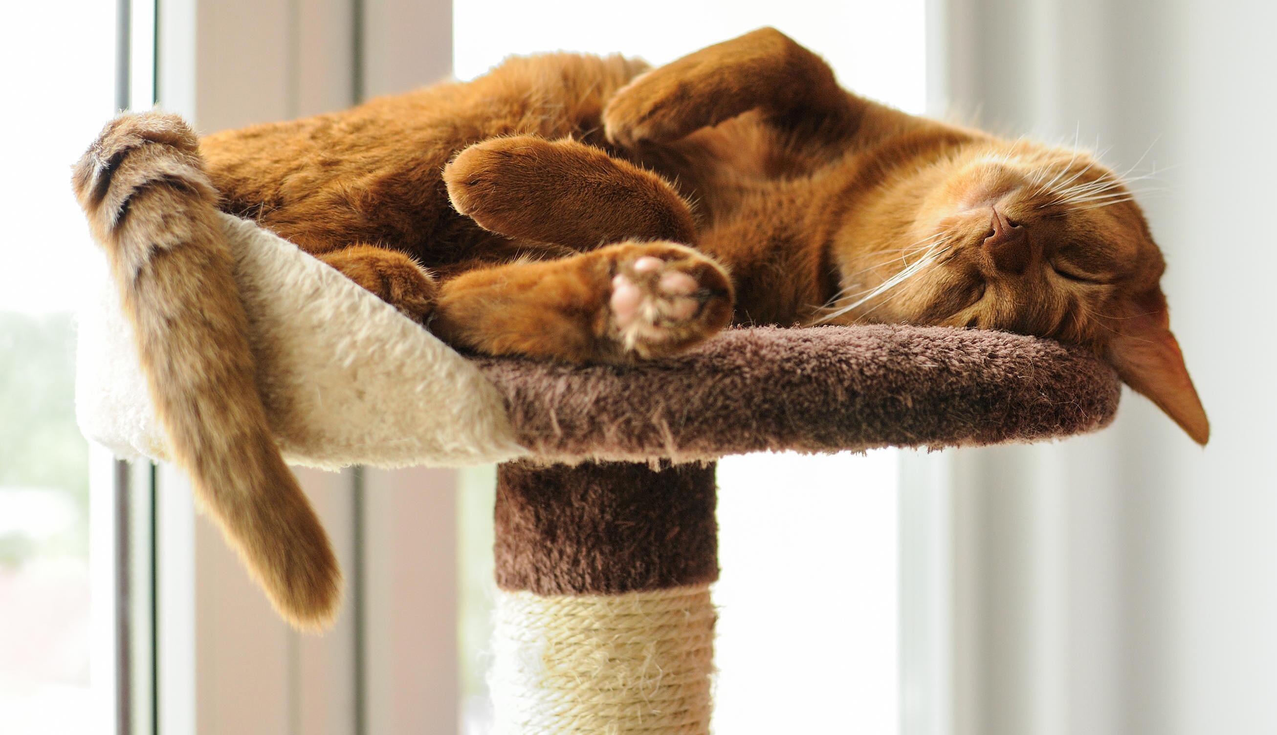 Bild zu Alles, was Katzen glücklich macht.