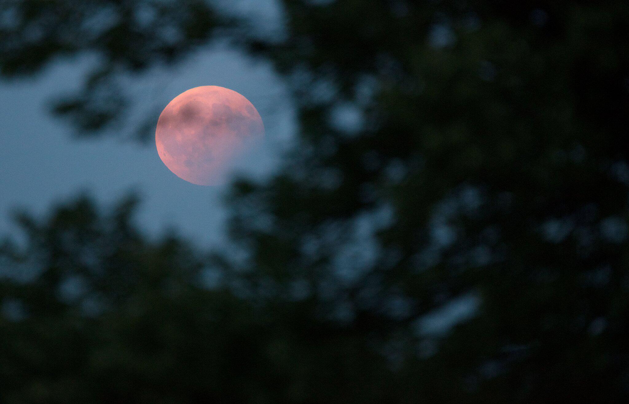 Bild zu Partielle Mondfinsternis