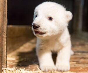 Eisbär Fritz