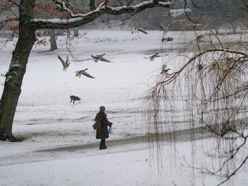 Bild zu Schnee in Hamburg