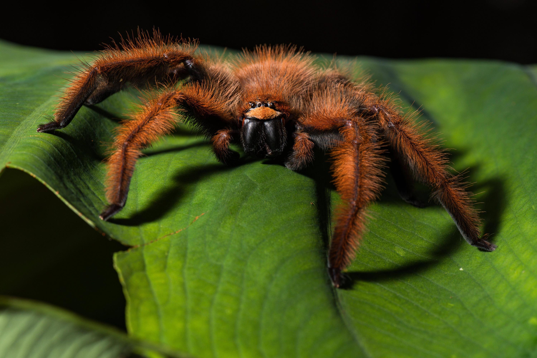 Bild zu Spinne mit tödlichem Gift in Halle in Hamm entdeckt