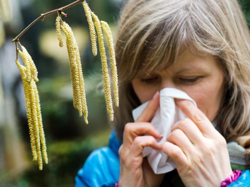 Bild zu Pollenallergie