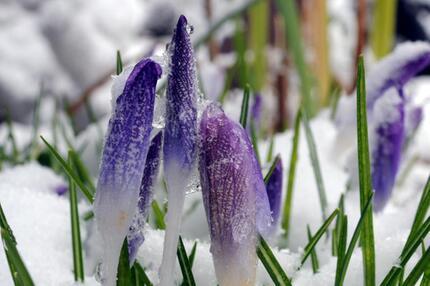 Frostiger Garten