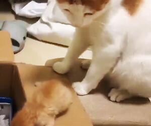 Katzenmama
