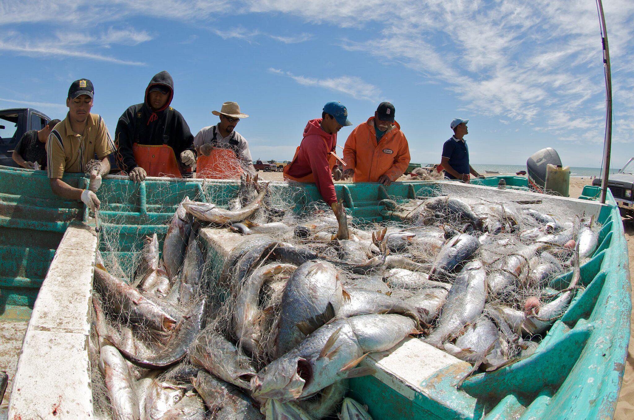Bild zu Lärmende Fische