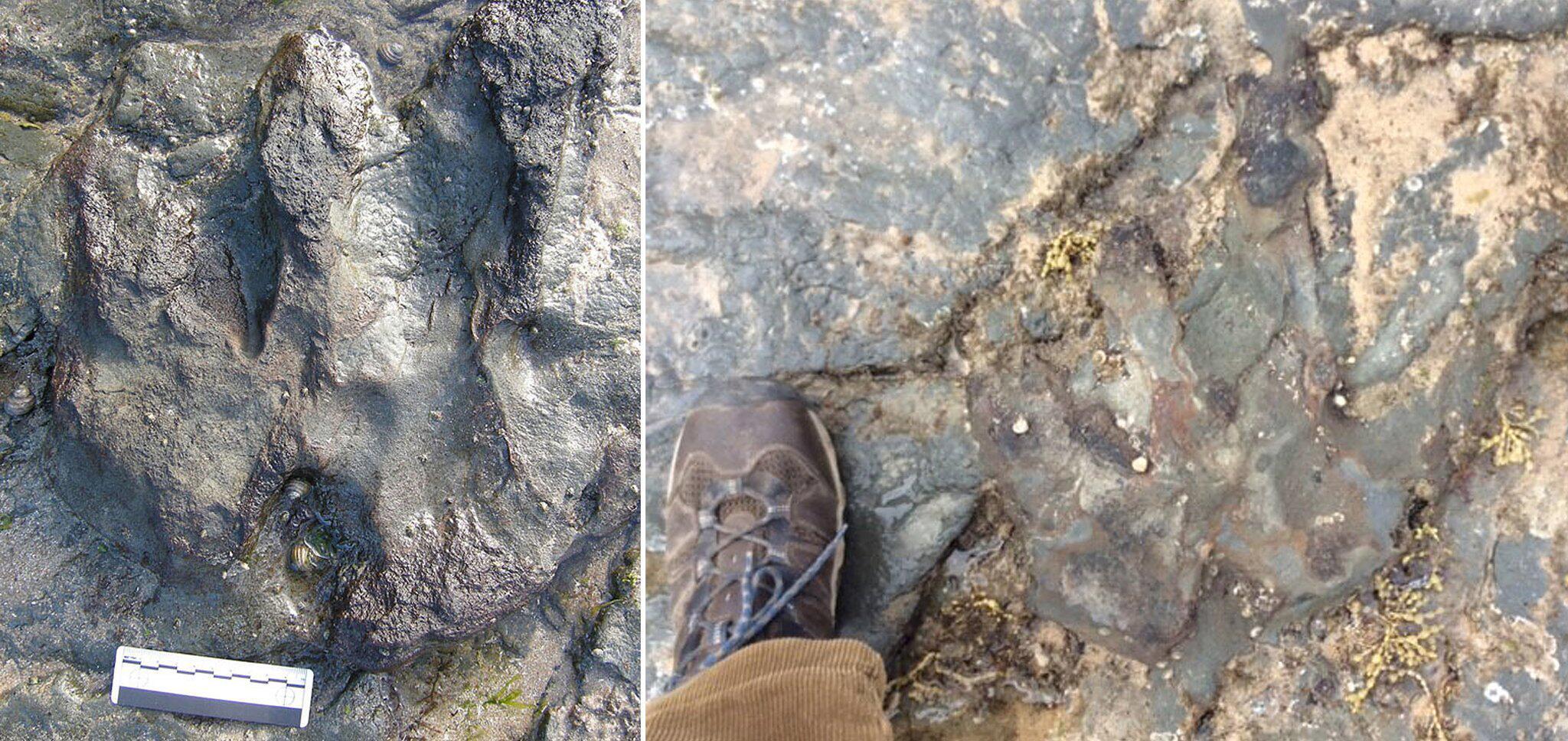 Bild zu 115 Millionen Jahre alter Dino-Fußabdruck beschädigt