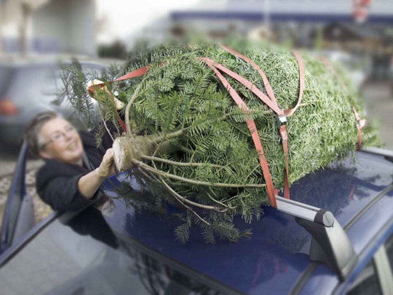 Bild zu Weihnachtsbaum transportieren: Keine einfache Angelegenheit